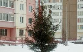 Установка новогодних ёлок на придомовых территориях
